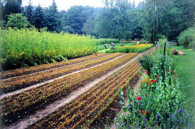Le jardin du Dr Hauschka