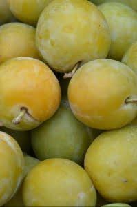 Prune Reine-claude