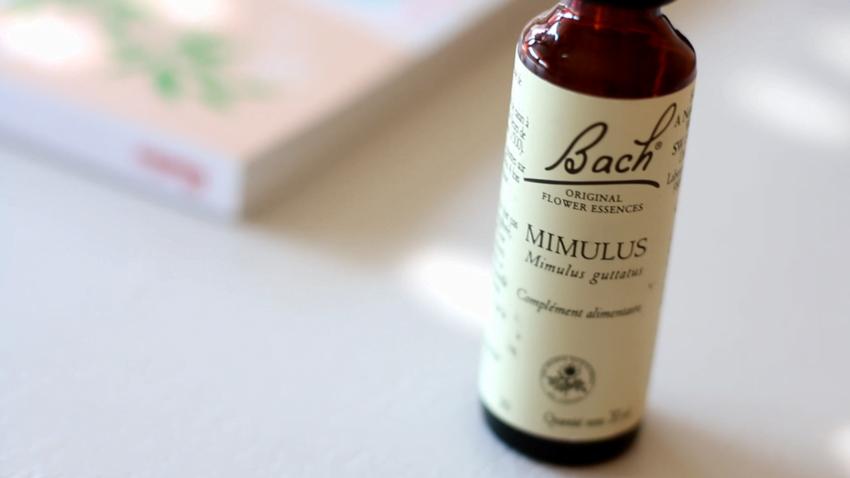 mimulus,fleur,de,Bach. »